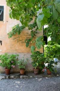 Italian-Fix-2015-116